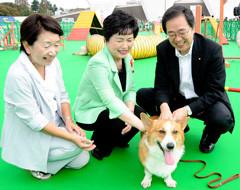 会場で犬とふれあう 斉藤鉄夫